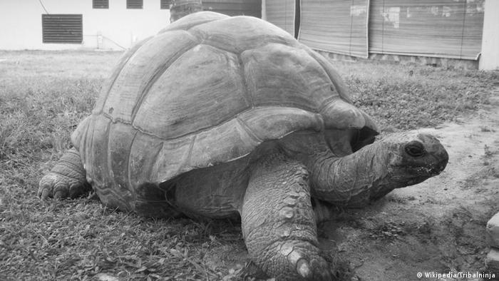 Giant tortoise Esmeralda