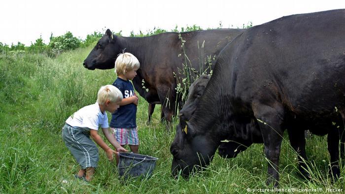 Kinder füttern Kühe (picture-alliance/Blickwinkel/F. Hecker)