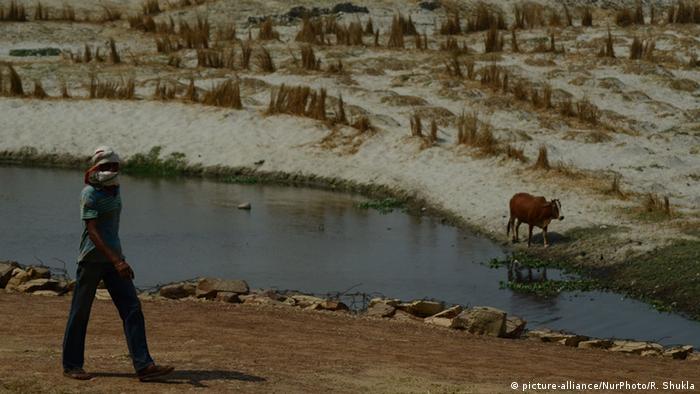 Ein vertrocknetes Baumwollfeld in Indien (Foto: AP)