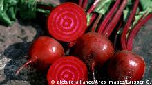 Sommerküche Rote Beete