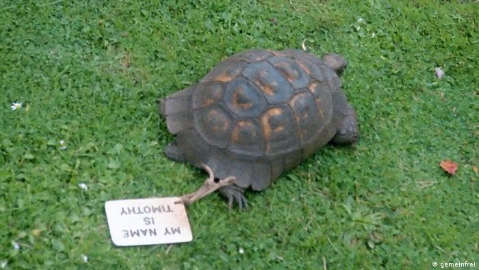 Timothy the Tortoise