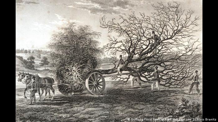 Maschine zum Versetzen großer Bäume Sir Henry Steuart