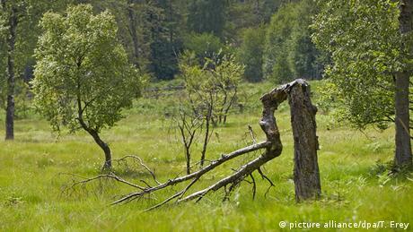 Bäume im Hunsrück-Hochwald