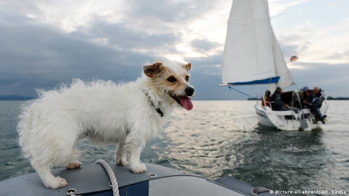 Deutschland Bodensee Vordergrund Hund vor Segelyacht