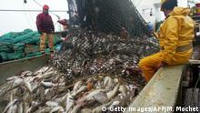 Barentssee Fang von Kabeljau