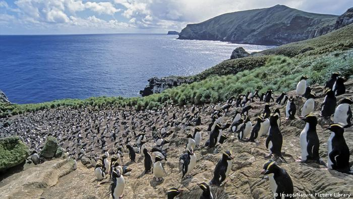 Neuseeland Antipoden-Inseln Antipodes Island (Imago/Nature Picture Library)