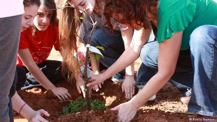 Several people planting trees