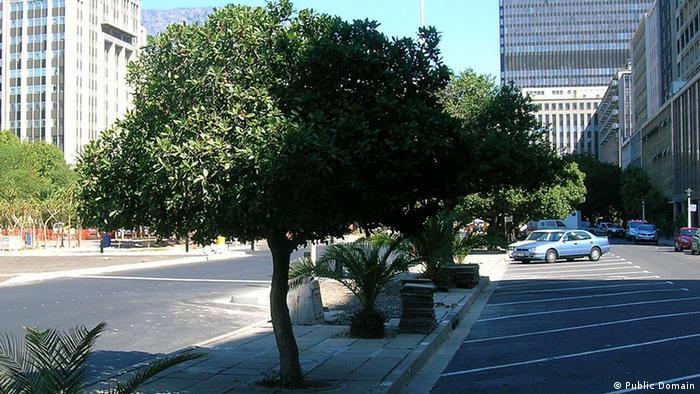 Ein Baum auf dem Bürgersteig