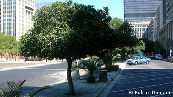 Realität – Bäume in der Stadt