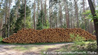 Απειλή για το δάσος η εντεινόμενη υλοτομία