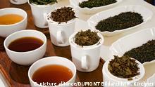 Teeprobe im Bünting-Teemuseum in Leer, Ostfriesland Copyright: picture alliance/DUMONT Bildarchiv/M. Kirchner