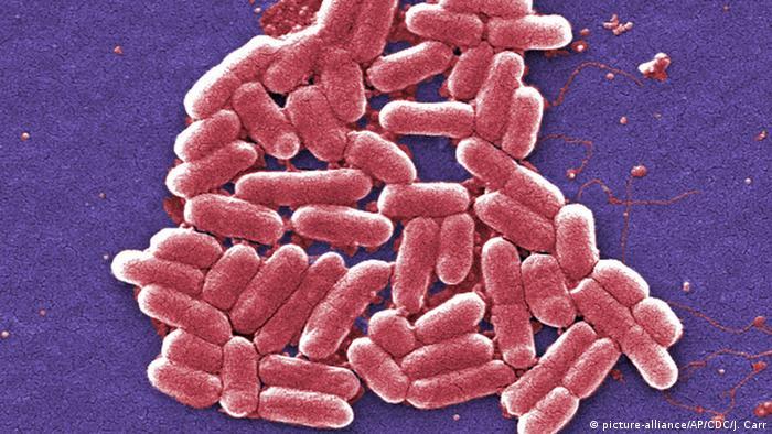E. coli und EHEC