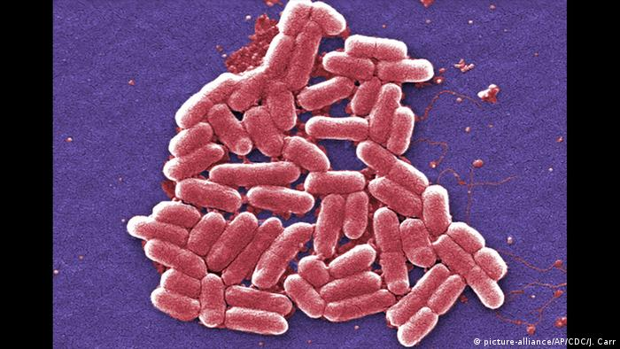 Super-Erreger E. coli bacteria O157:H7