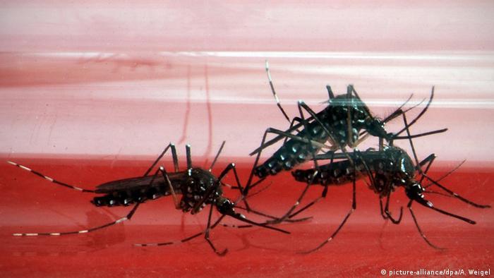 10 Dicas Para Prevenir O Contágio Da Febre Amarela Angola Dw