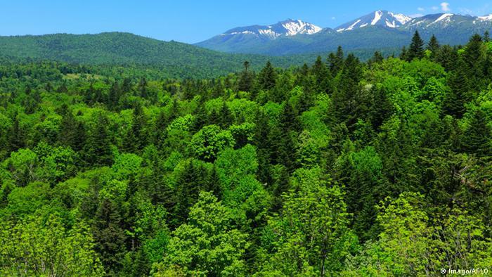 Japan Wald auf Hokkaido