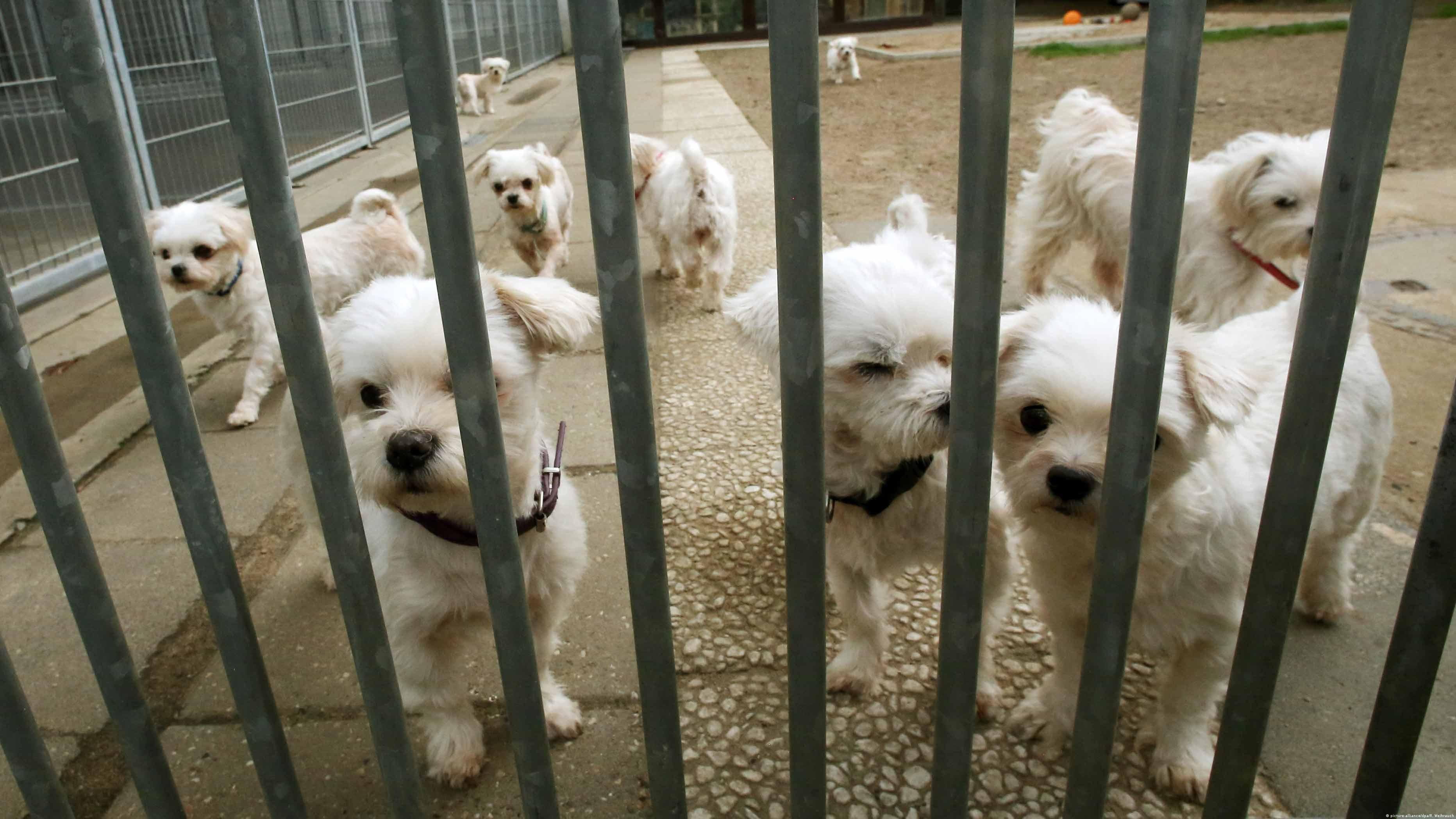 Almanya'da ihmal nedeniyle sahibinden alınarak bakımevine koyulan köpekler yeni sahiplerini bekliyor.