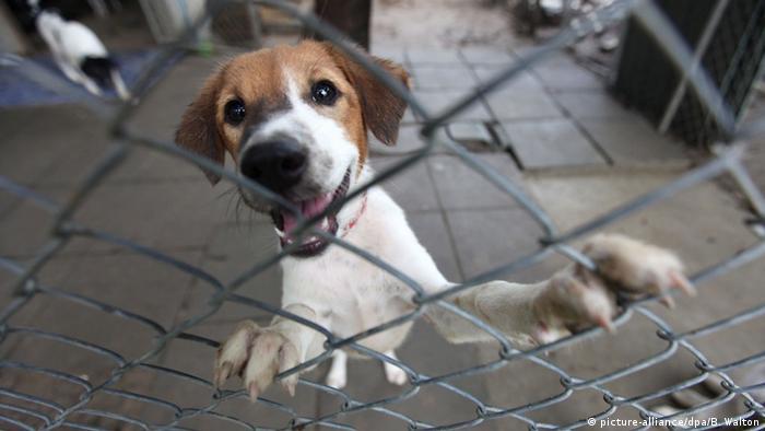 Thailand Hund wartet auf Adoption