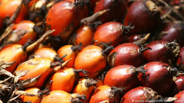 Palm oil fruits in Indonesia (picture alliance/ZUMA Press/Y. Seperi)