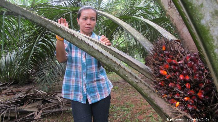 Palm oil farmer in Thailand holds palm branch (c) picture-alliance/dpa/C. Oelrich
