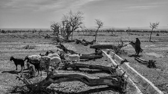 Iran Dürre Bildergalerie (Irna)