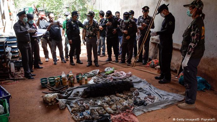 40 dead tiger cubs found