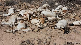 Pastoralisten Somalia