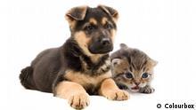 Gestreiftes Kätzchen und Welpe