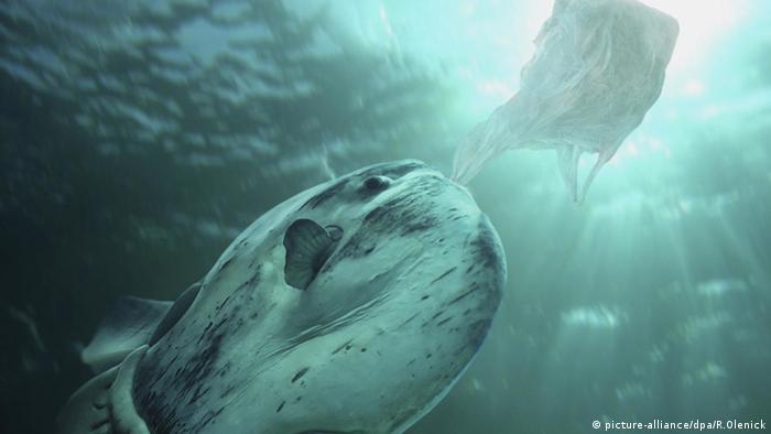 Mola mola Sonnenfisch Plastiktüte