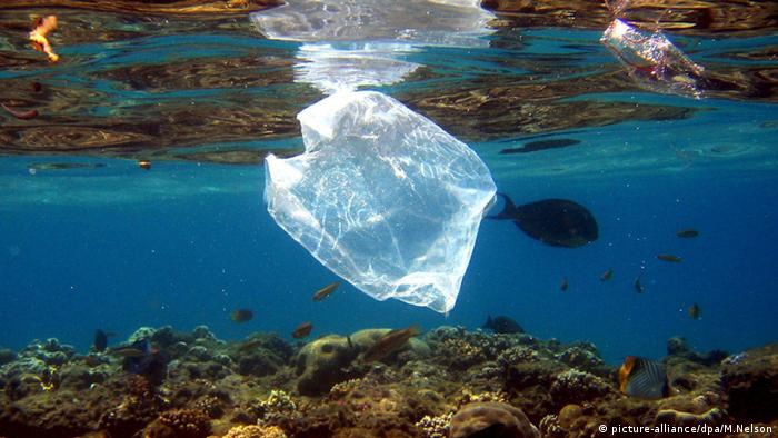 Ein Fisch schwimmt nahe einer Plastiktüte im Roten Meer (picture-alliance/dpa/M.Nelson)