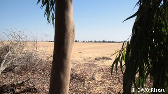 Trees at edge of desert © DW/O.Ristau