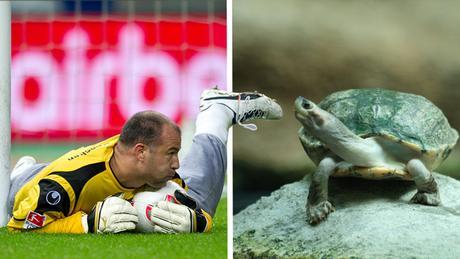 Bildkombi Fussballspieler Gabor Kiraly und Schildkröte