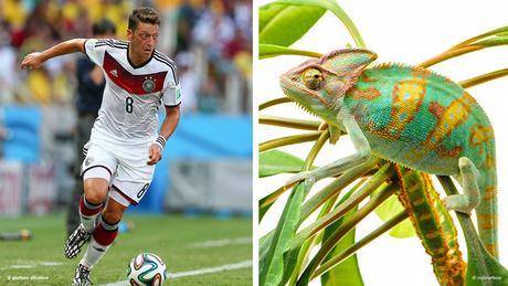 Bildkombi Fussballspieler Mesut Özil und Chamäleon (Fotos: dpa/colourbox)