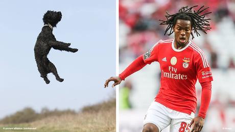 Bildkombi Fussballspieler Renato Sanches und springender Pudel (Fotos: dpa/imago)