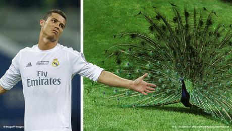 Bildkombi Fussballspieler Christiano Ronaldo und Pfau (Fotos: Imago/dpa)