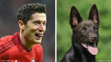 Bildkombi Fussballspieler Robert Lewandowski und Hund (Fotos: dpa/imago)
