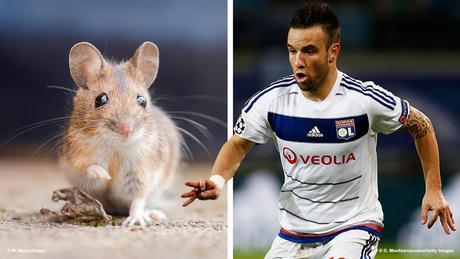 Bildkombi Fussballspieler Mathieu Valbuena und Maus (Fotos: imago/Getty)