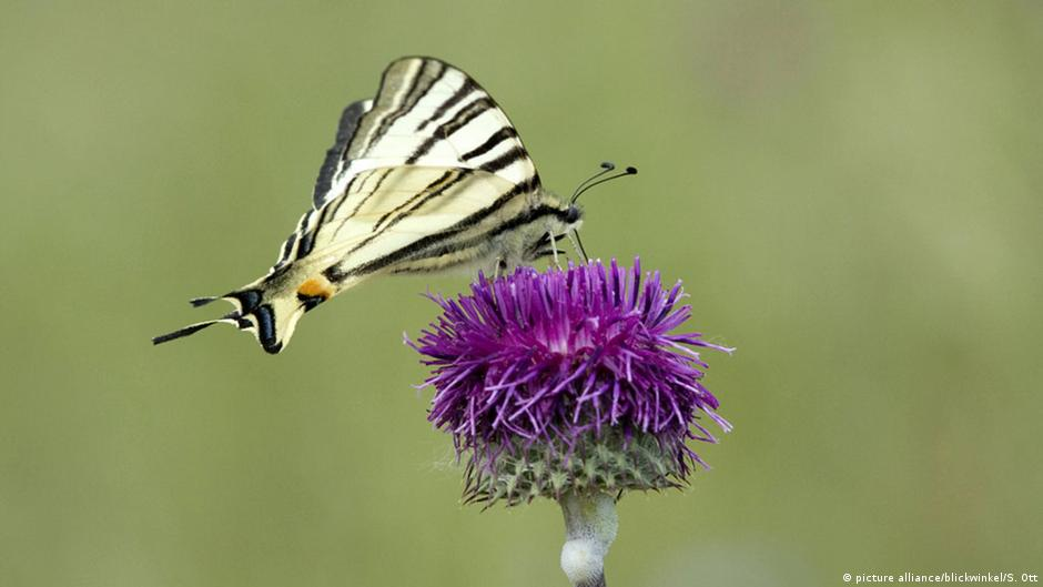 Rethinking evolution: Butterflies came first, flowers came