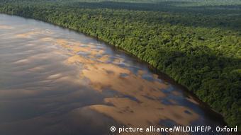 Περιζήτητη η ξυλεία των τροπικών δασών του Αμαζονίου από εγκληματικές οργανώσεις