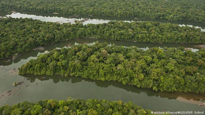 Guayana, Fluss Essequibo (picture alliance/WILDLIFE/P. Oxford)