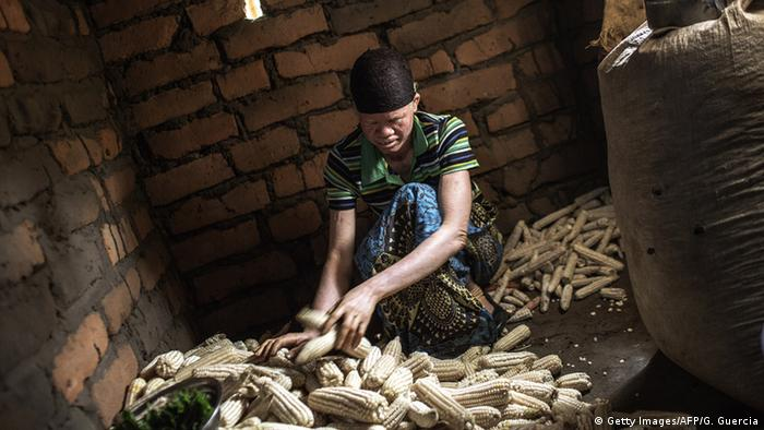 Dorothy Mausen sorts corn cobs in a dark hut.