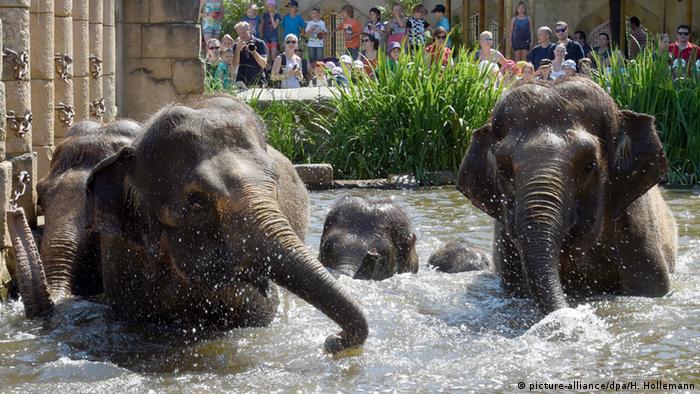 Deutschland Zoon in Hannover - Elefanten