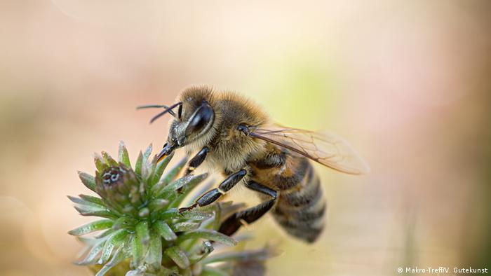 Pesticides may be lowering sperm count of bees