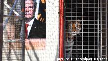 Berlin Zentrum für Politische Schönheit Flüchtlinge fressen Tigergehege
