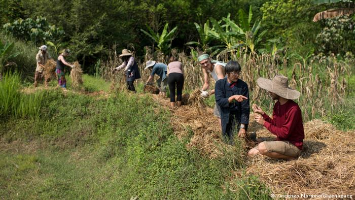 people working in a field