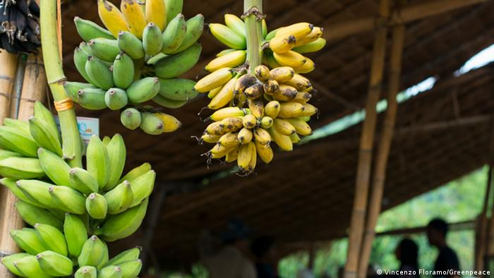 Bundles of Bananas hang outside a building