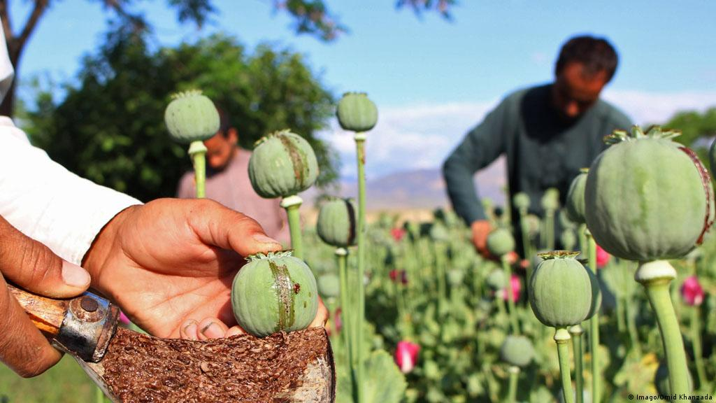 Boom time for Colombian cocaine, Afghan opioids | News | DW | 22 06 2017