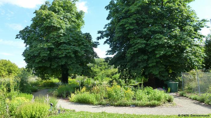 Apothecary's garden in Dessau
