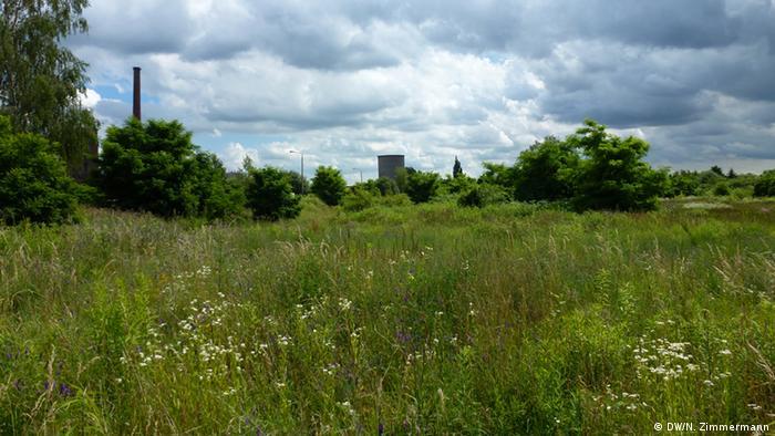 Dessau: A field where apartments once stood