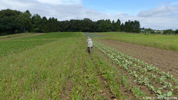 Agricultura org�nica: ayudando al medio ambiente gracias a la comunidad