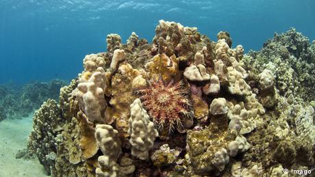 Korallenriffe Hawaii
